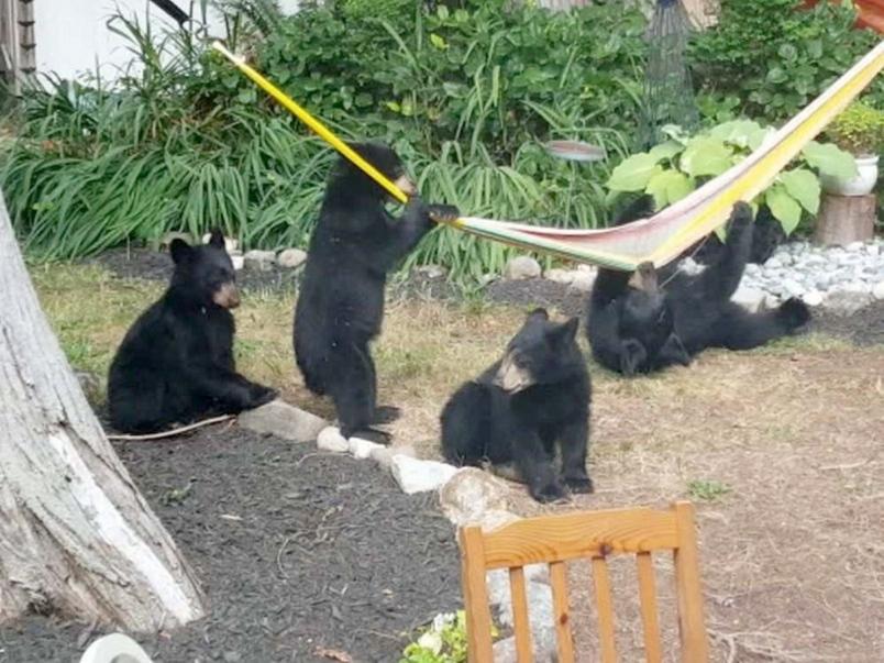 0829-bears-jpg